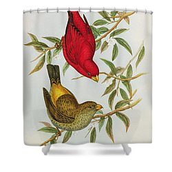 Haematospiza Sipahi Shower Curtain by John Gould