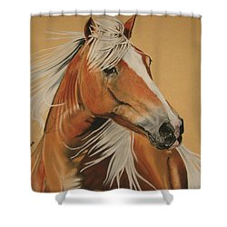 Haflinger  Shower Curtain by Melita Safran