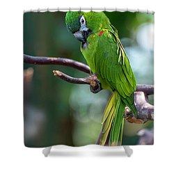 Hahn's Macaws Shower Curtain