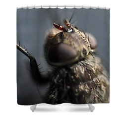 Shower Curtain featuring the photograph Hair On A Fly by Glenn Gordon