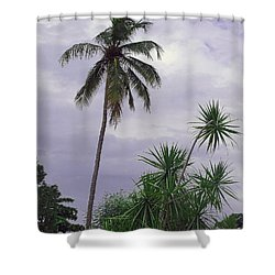 Haiti Where Are All The Trees Shower Curtain by B Wayne Mullins