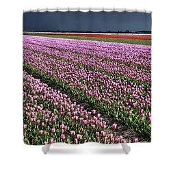 Half Side Purple Tulip Field Shower Curtain by Mihaela Pater
