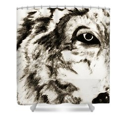 Shower Curtain featuring the drawing Pencil Drawing Of Half Wolf Face By Ayasha Loya by Ayasha Loya