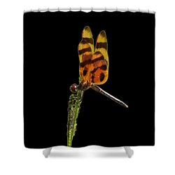 Shower Curtain featuring the photograph Halloween Pennant Dragonfly .png by Al Powell Photography USA