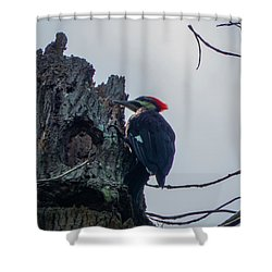 Hammering It Home Shower Curtain by Kimo Fernandez