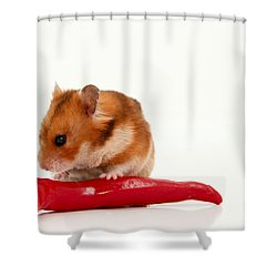 Hamster Eating A Red Hot Pepper Shower Curtain by Yedidya yos mizrachi