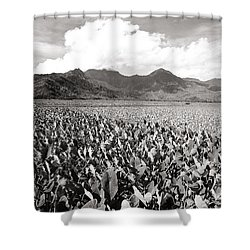 Hanalei Taro Fields Shower Curtain by Bob Abraham - Printscapes