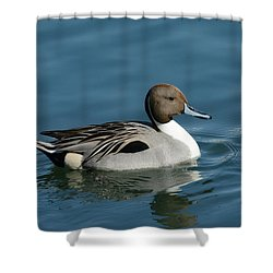 Shower Curtain featuring the photograph Handsome Drake by Fraida Gutovich