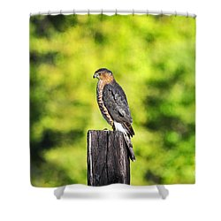 Shower Curtain featuring the photograph Handsome Hawk by Al Powell Photography USA