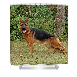 Shower Curtain featuring the photograph Handsome Rocco by Sandy Keeton