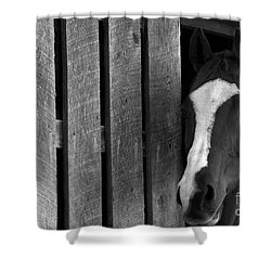 Shower Curtain featuring the photograph Handsome T by Angela Rath