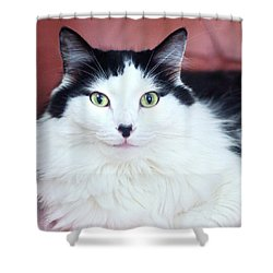 Shower Curtain featuring the photograph Handsome Tuxy by Byron Varvarigos