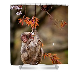 Shower Curtain featuring the photograph Hang In There, Baby Redux by Rikk Flohr
