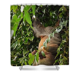 Hang On Mom Shower Curtain by Pamela Blizzard
