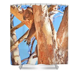 Hanging Around, Yanchep National Park Shower Curtain by Dave Catley
