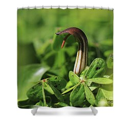 Hanging Out Shower Curtain by Stephan Grixti