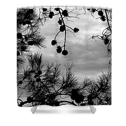 Hanging Pine Cones Shower Curtain