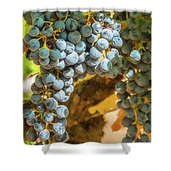 Hanging Wine Shower Curtain