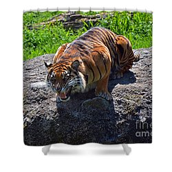Hangry Shower Curtain