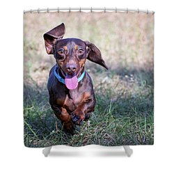 Happy Dachshund Shower Curtain by Stephanie Hayes