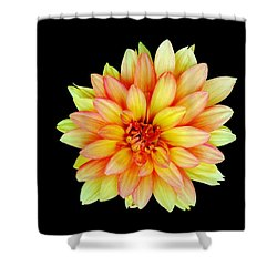 Happy Dahlia Shower Curtain