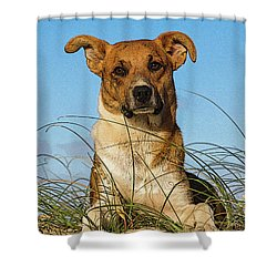 Happy Dog At The Beach Shower Curtain