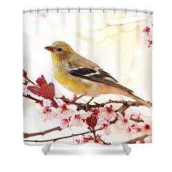 Happy Goldfinch Shower Curtain by Trina Ansel