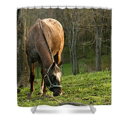 Happy Grazing Shower Curtain by Angela Rath