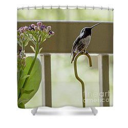 Happy Hummer Shower Curtain by Anne Rodkin