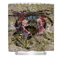 Shower Curtain featuring the photograph Happy Little Crab by Brandy Little