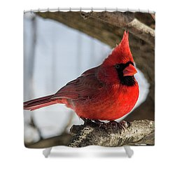 Happy Mister Cardinal Shower Curtain
