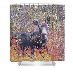 Happy Moose Shower Curtain by Elizabeth Dow
