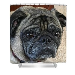 Happy Pug Shower Curtain by Russell Keating