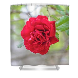 Shower Curtain featuring the photograph Happy Red Flower by Raphael Lopez