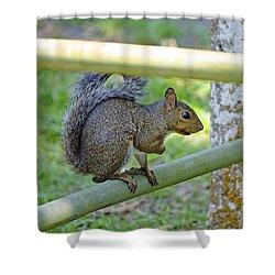 Happy Squirrel Shower Curtain by Kenneth Albin