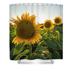 Happy Sunflower Shower Curtain