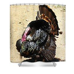 Happy Thanksgiving Shower Curtain by Joseph Frank Baraba