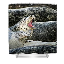 Harbor Seal Shower Curtain by Anthony Jones