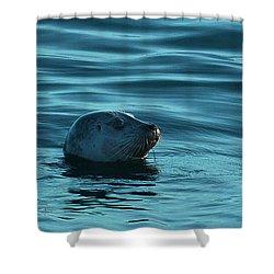 Harbor Seal Shower Curtain