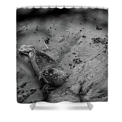 Harbor Seal Pup Monochrome  Shower Curtain