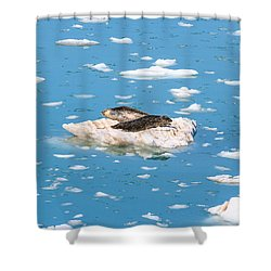 Harbor Seals On Clouds Of Ice Shower Curtain by Allan Levin