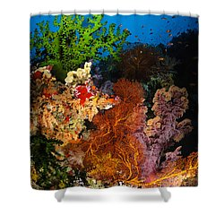 Hard Coral And Soft Coral Seascape Shower Curtain by Todd Winner