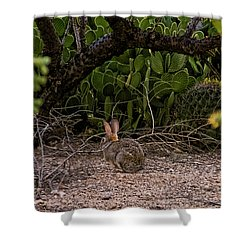 Shower Curtain featuring the photograph Hare Habitat H22 by Mark Myhaver