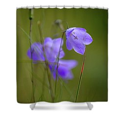Shower Curtain featuring the photograph Harebell by RKAB Works