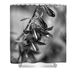 Shower Curtain featuring the photograph Harebells 2 by Leif Sohlman