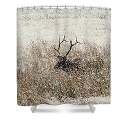 Harem Bull Shower Curtain