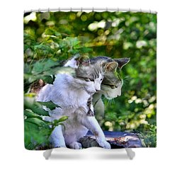 Shower Curtain featuring the photograph Harlequin Cat Twins by Chriss Pagani