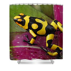 Harlequin Poison Dart Frog  Shower Curtain by Thomas Marent