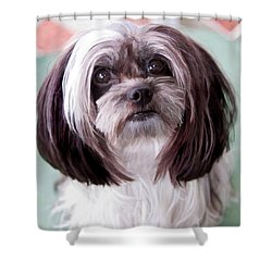 Shower Curtain featuring the photograph Harley by Cherie Duran