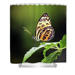 Shower Curtain featuring the photograph Harmonia Tiger Wing by Grant Glendinning